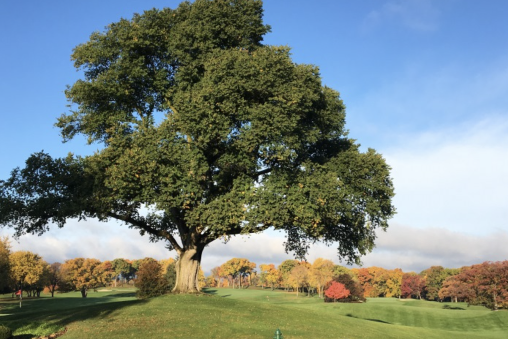 Bloomfield-Hills-Country-Club